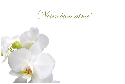 orchidee blanche carte